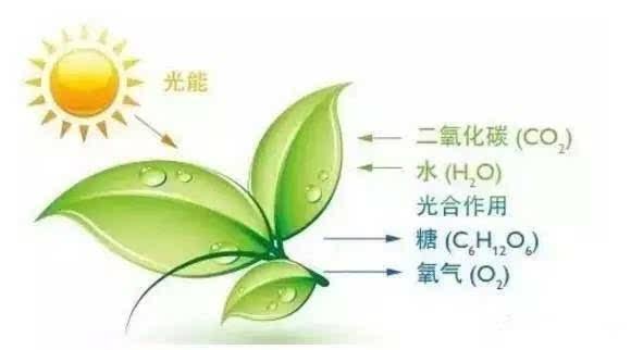 带根系植物卡通图