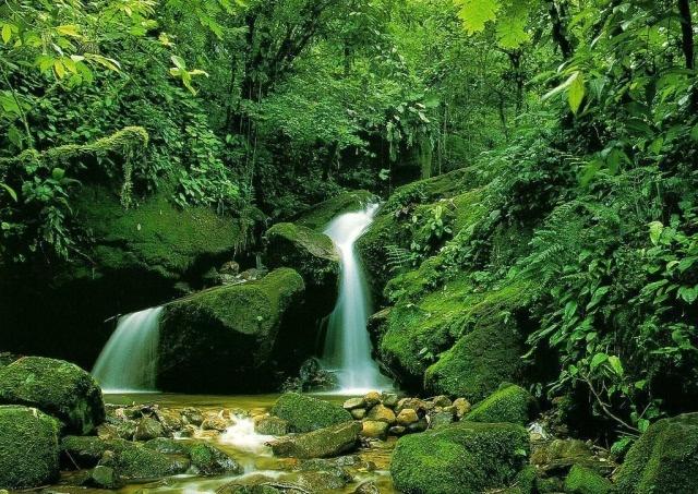 古筝四重奏为《森林狂想曲》更添色彩,如行云流水.