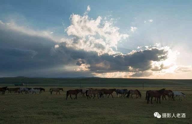 新疆蒙古族牧民,雪山下草原骑马放牧,随季节迁徙保持游牧生活