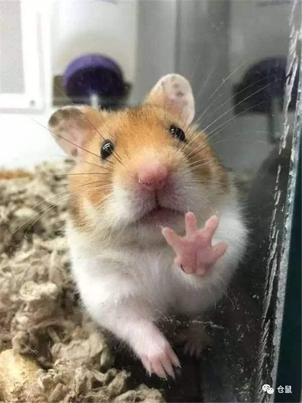 表情仓鼠是隐藏的宝宝帝蚊子总是咬人要用什么药膏图片