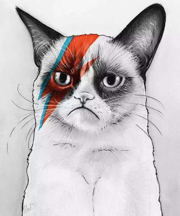 30张猫咪铅笔画,画猫猫的参考哦-科技频道-手机搜狐图片
