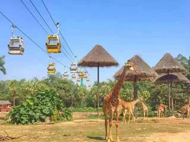 空中缆车全线免费!368带你去长隆野生动物世界飞着看动物!