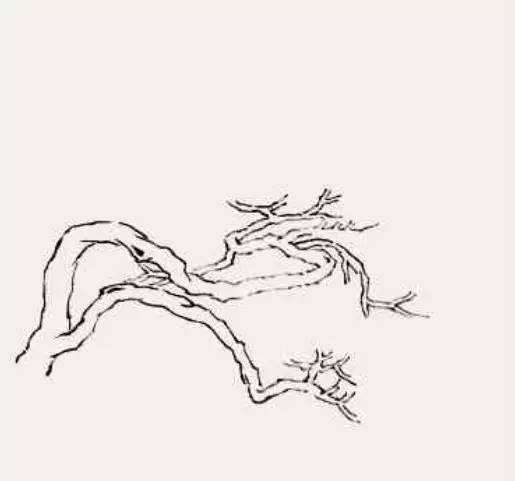 【图文示范教程】松树的画法