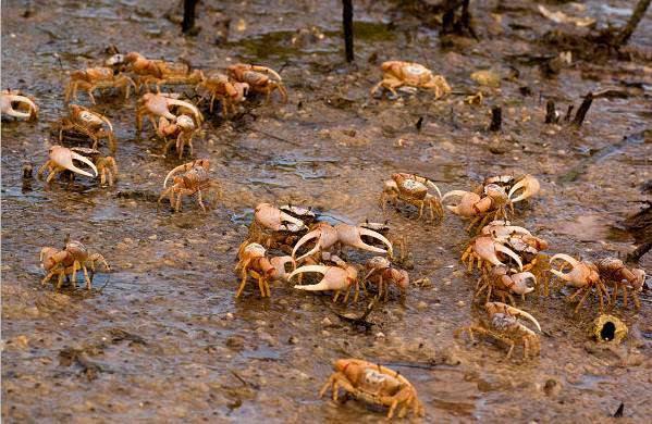 螃蟹为什么横着走?——有钳,任性.-科技频道-手机搜狐