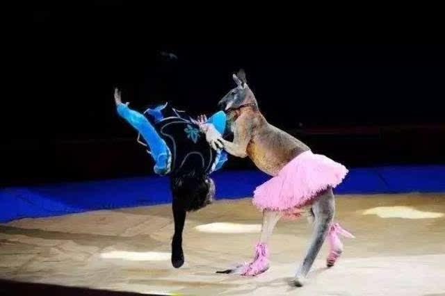 融合武术,杂技,舞蹈等多元表演形式,如动物卖萌,环球飞车,红鼻子小丑