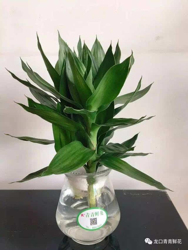 招财植物做微信头像