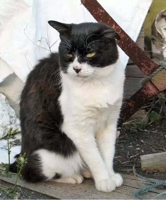 猫咪报恩救人感动全日本,这里是猫奴们的世外桃源图片