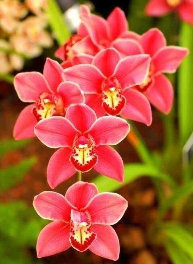 欣赏100种珍稀兰花,享受夏日里的清香-文化频道-手机图片