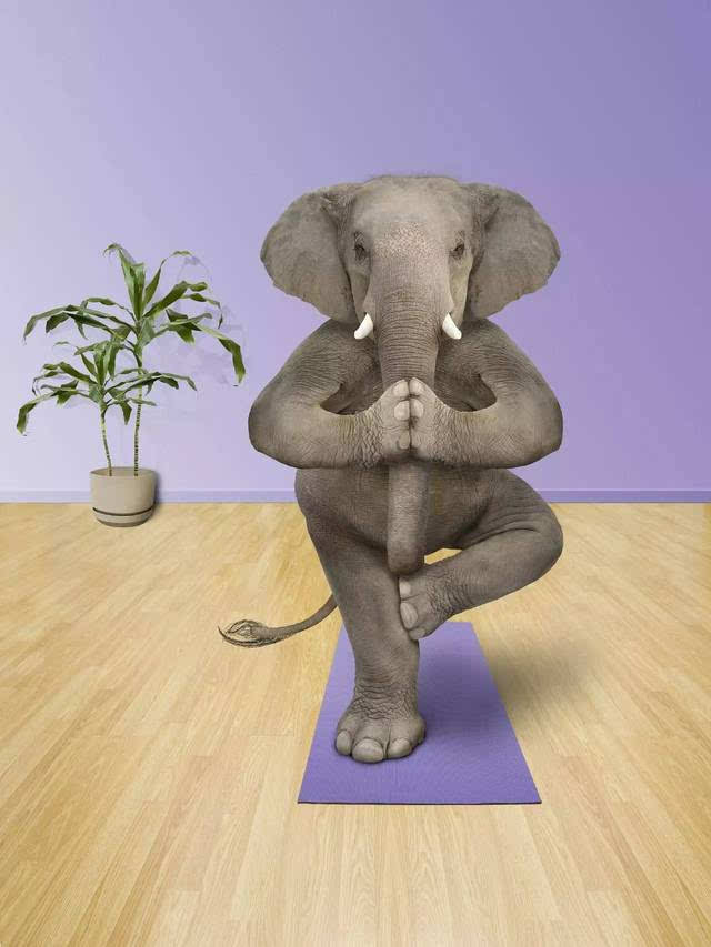 动物瑜伽 | 软萌图片走一发