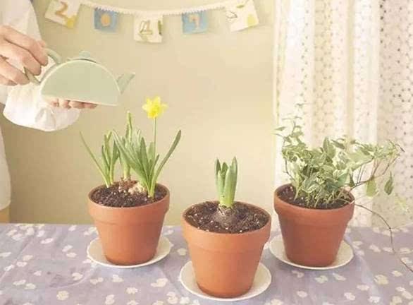 紫钰花园手绘小花盆 绿植diy本周末等您来
