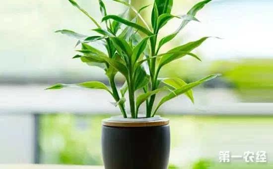 9种适合懒人养的盆栽植物介绍 连 养花杀手 都难养死