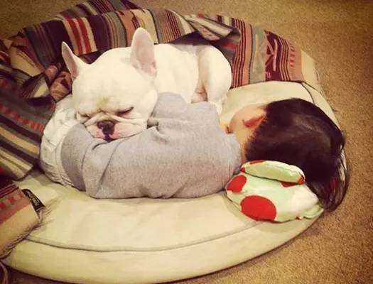 到底能不能和给狗狗一起睡觉呢?