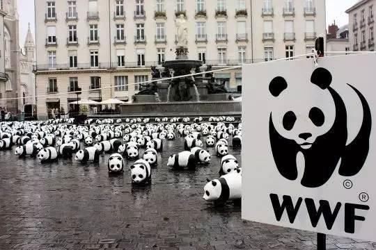 一只你最熟悉的熊猫丨哈牛堂