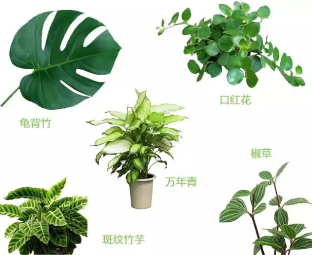 自己家室内植物搭配指南