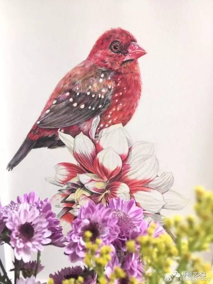 【彩铅画教程分解】鸟语花香#彩铅手绘#临木卮大大的第二幅彩铅木卮