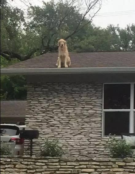 一只超喜欢爬到屋顶看风景的狗狗
