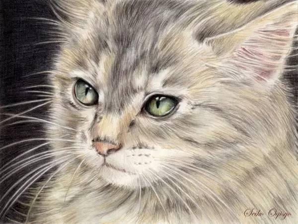 手绘插画   她用彩铅画了好多猫~-cgwang教育