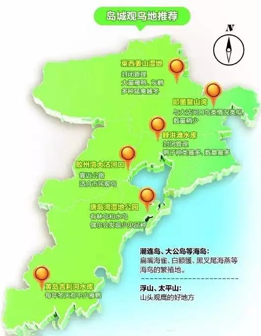 """青岛周边最全""""观鸟地图"""" 这些鸟类你都见过吗?"""