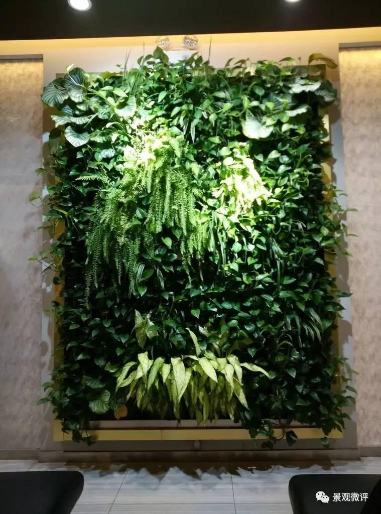 cad植物图例免费下载
