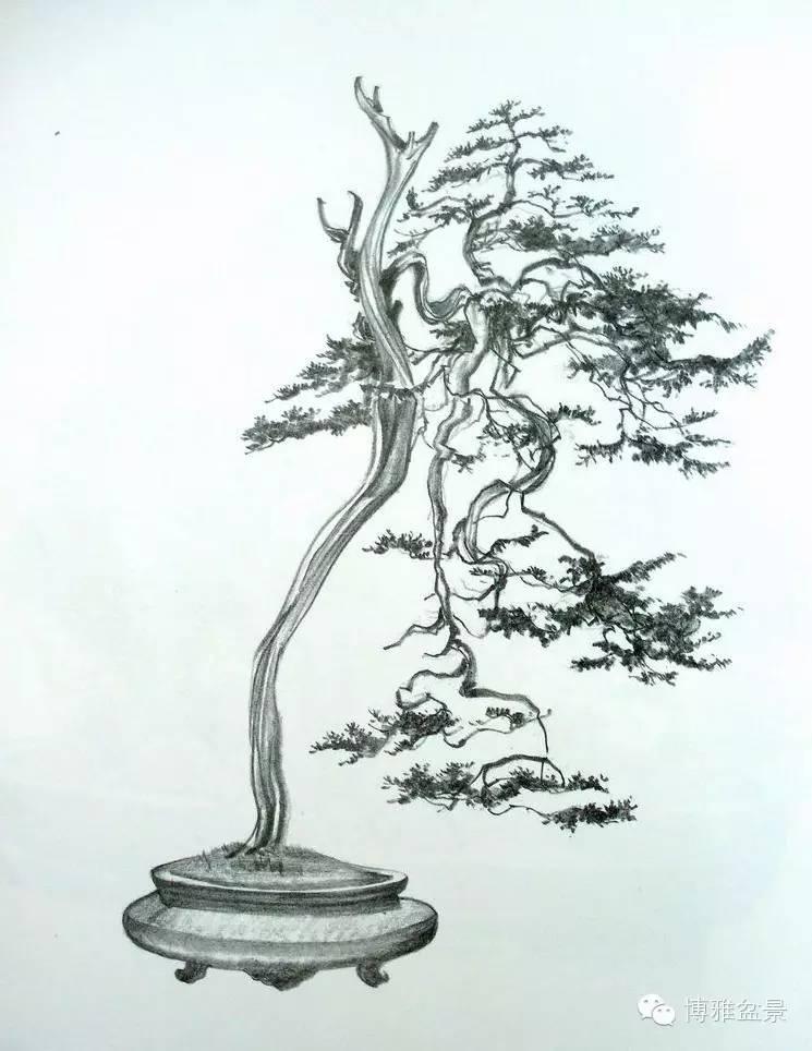 简笔画 盆景 盆栽 手绘 线稿 植物 745_964 竖版 竖屏