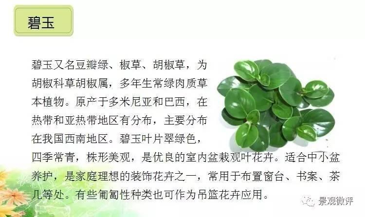 盆景 盆栽 植物 750_446