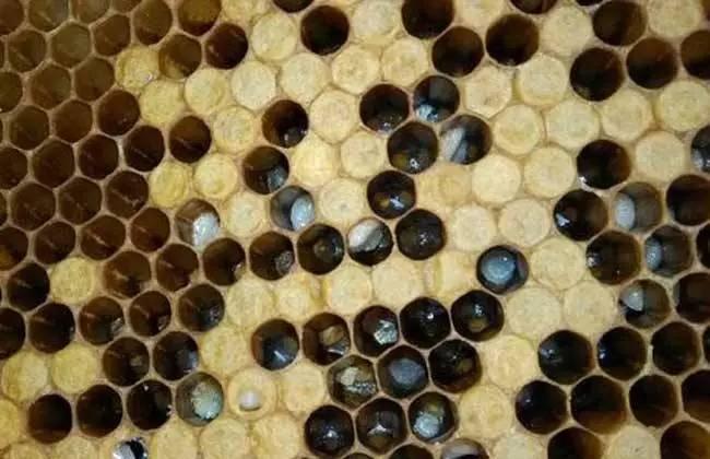 小蜜蜂黑白矢量