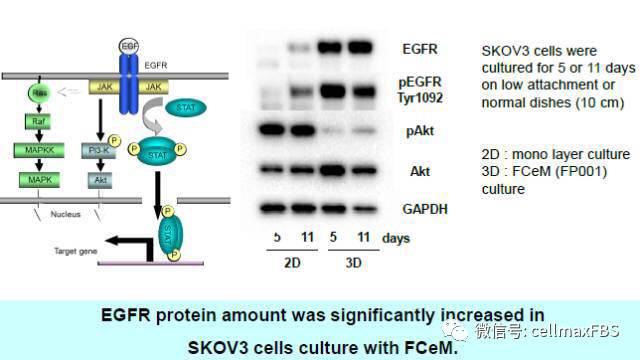 3d细胞培养,你了解吗?