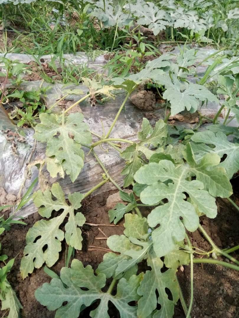 枯萎植物素材矢量