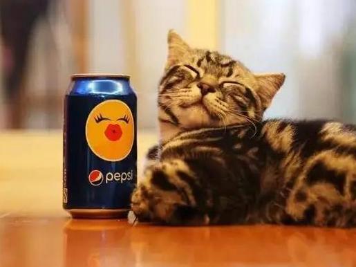 动物喝饮料动图