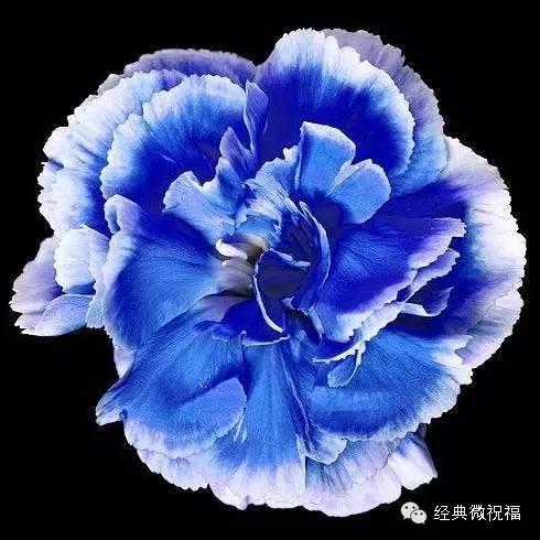 明天5.14母亲节,最美的514朵康乃馨送给全天下每一位母亲!