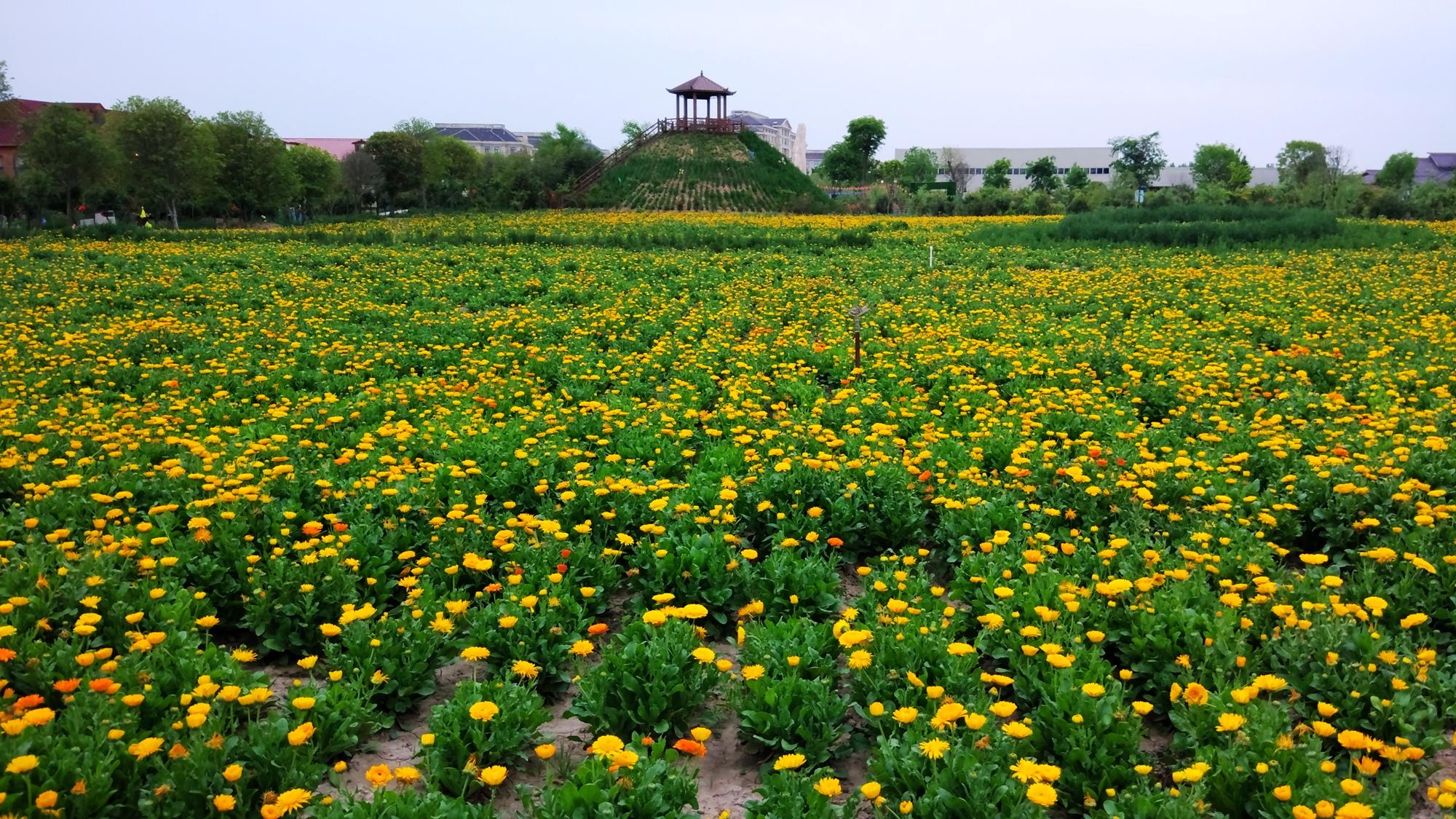 鄢陵2018动物公园
