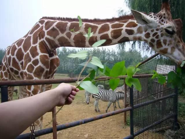 【5月21日】杭州野生动物园一日游218元(送50银果)