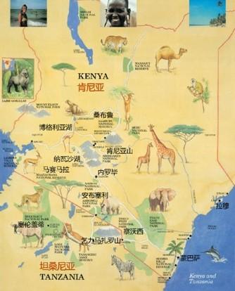 东非大草原上数以百万计的野生动物开始了一年一度的大迁徙,成群结队