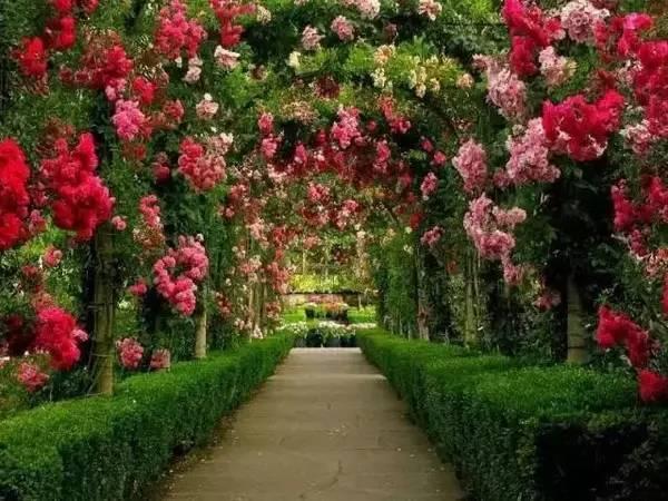 行业动态 || 花园中的奇葩——加拿大布查特花园