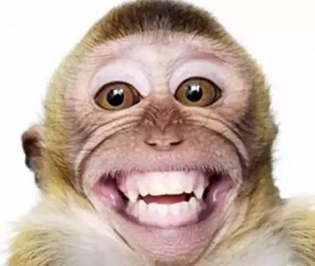 ag游戏直营网|平台的牙齿和爪的不同特点对ag游戏直营网|平台的捕食有什么好处