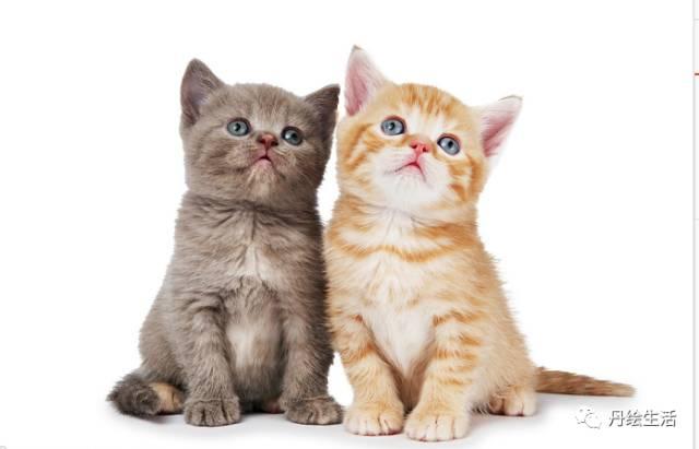 绘猫咪 第一期简笔画猫咪之旅优秀作业19 20 21