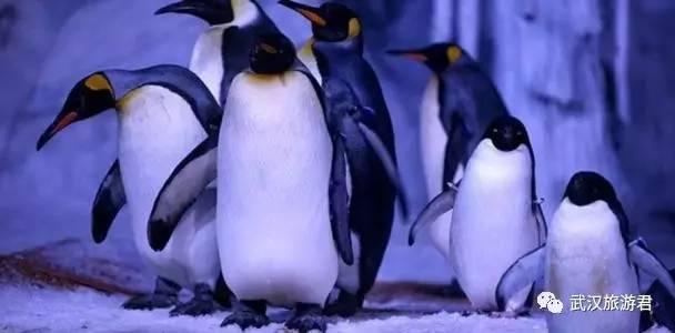 除了惹眼的一座,北极熊和市场,还有企鹅闪烁着奇幻彩灯的爱斯基摩人冰旅顺鸽子海象在那图片