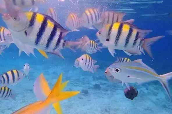 壁纸 动物 海底 海底世界 海洋馆 水族馆 鱼 鱼类 591_394