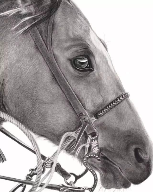 她用铅笔画了一匹马,折服了千万粉丝.太强悍了!