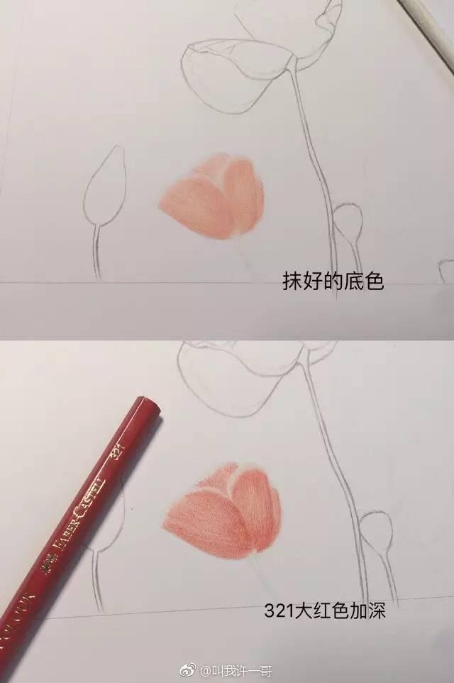 彩铅手绘虞美人详细步骤,喜欢的一起画吧