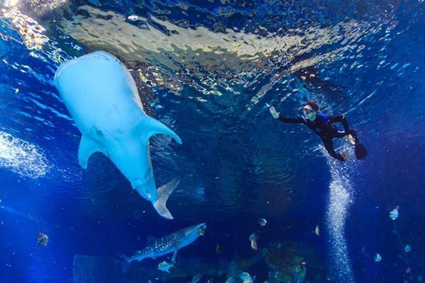 神吐槽: 不正经鲨鱼 水下深入裙中图片
