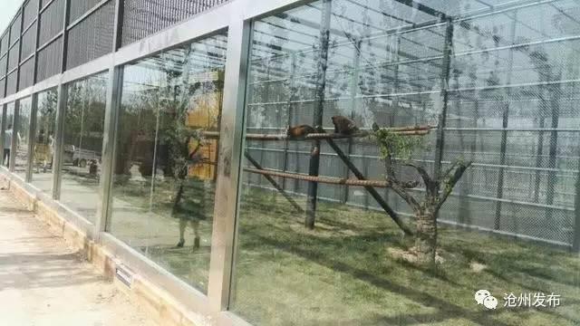 沧州新动物园即将开业!内附路线,地图