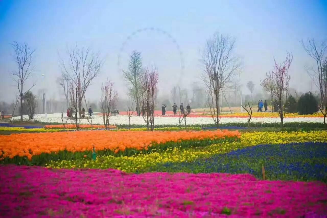 五月的鄢陵,满园春色关不住 愕然回首 只见那 十里花都万亩春光秀