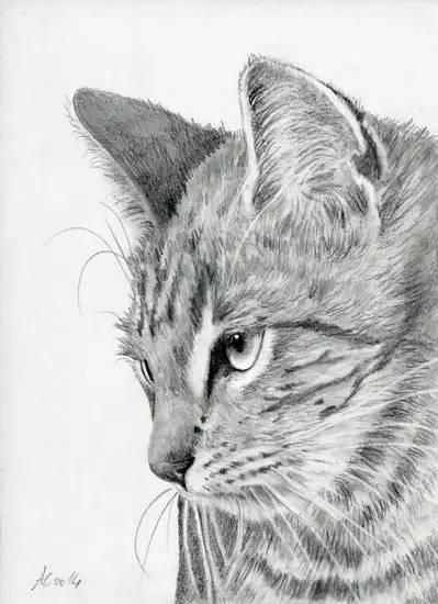其实还有很多素描绘画的内容 写生素描在表现内容上分为 静物,动物