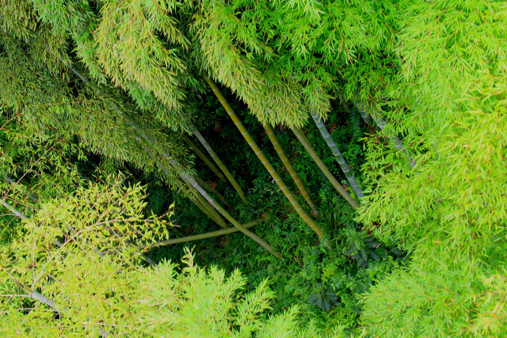 这是什么样的一片竹林 竟然跨了三个省