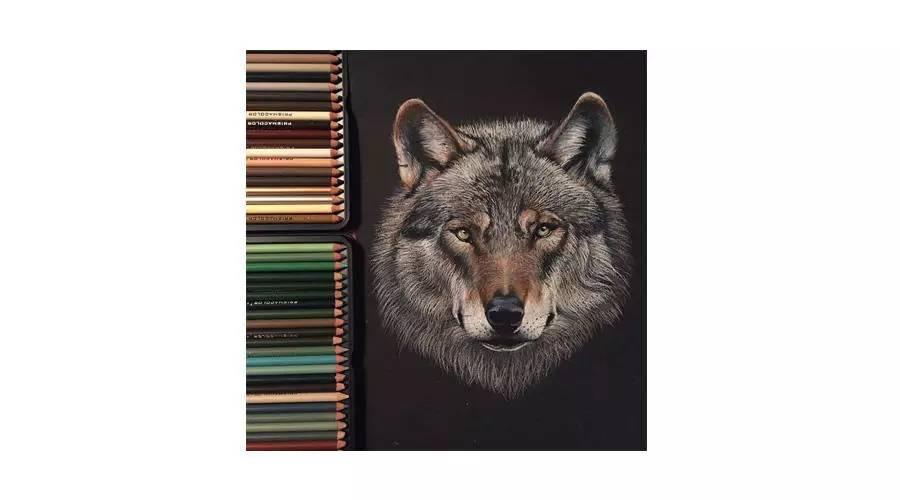 彩铅手绘狼立体
