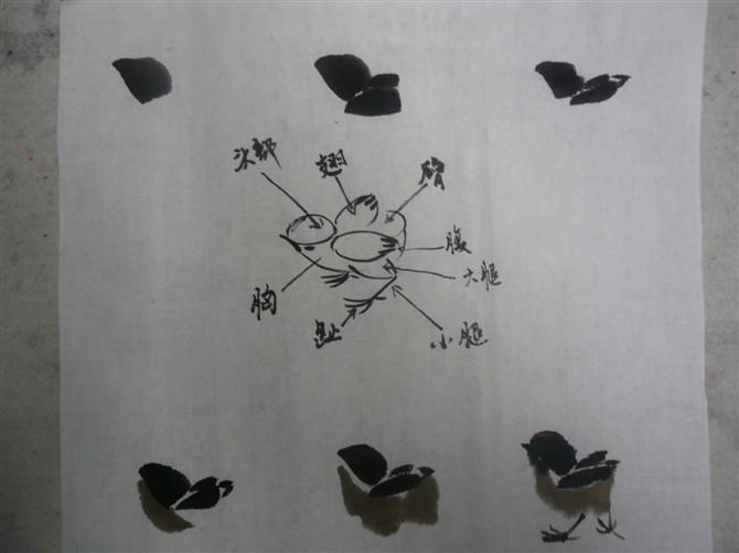 具体画法步骤 用大白云笔中等墨色,笔尖略调浓墨,画头,双翅和臀。最后用朱砂点鸡冠(看看小鸡的动态规律) 二、怎样画麻雀(小鸡引申麻雀) 画麻雀与小鸡用笔一样,不同的是飞行和色彩的变化 (一)用大白云笔调赭石笔尖点淡墨画头 (二)画背和双翅,前实后虚 (三)再加墨画飞翅和尾羽 (四)用淡墨画胸,腹,用浓墨点背斑,嘴眼,腮斑爪子(如图)