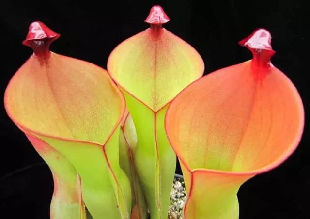 花朵结构示意图简图