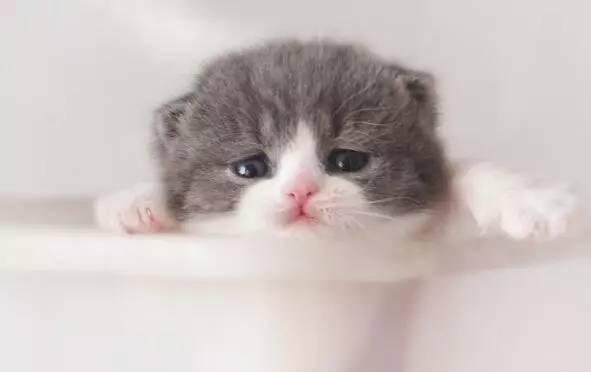 会感到紧张和害怕,很多人经过,嘈杂声音也会增加小猫的压力.图片