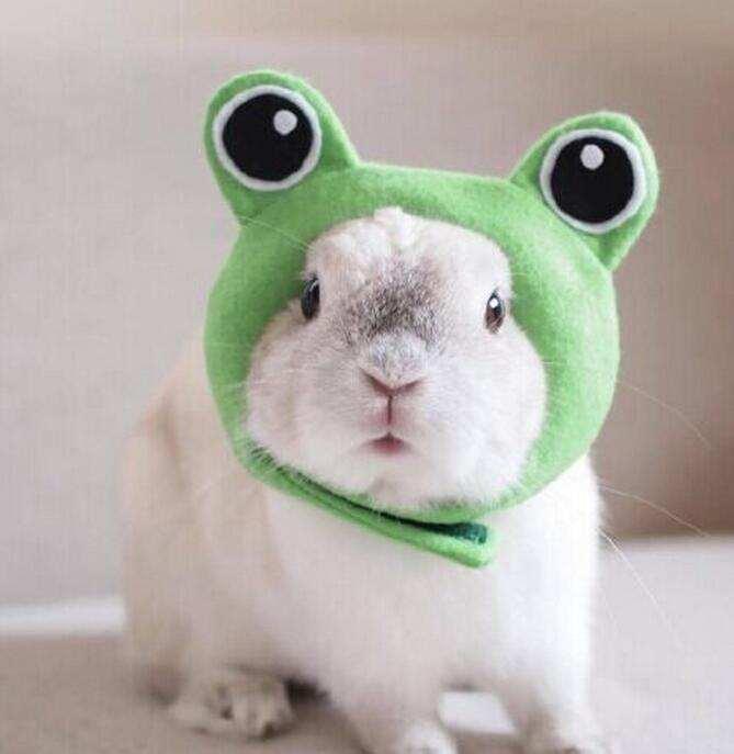 两只兔兔图片大全可爱